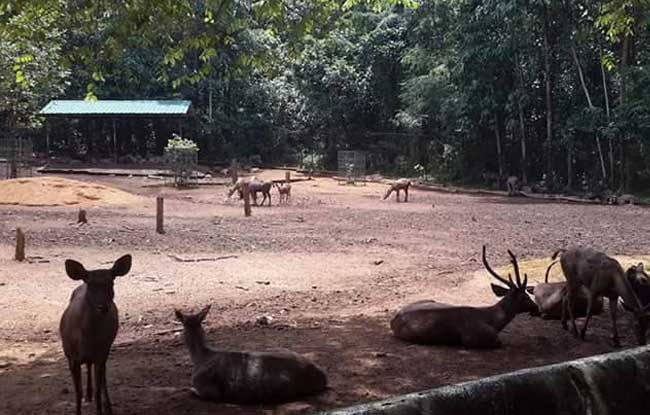 Abhayaranyam mini zoo